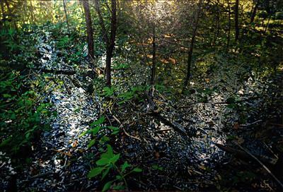 对话自然 圣路易斯地区风景绘画与素描作品邀请展